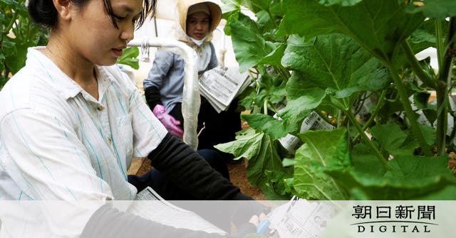 外国人の農業就労、即戦力と期待 課題は失踪 戦略特区